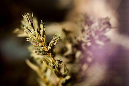 juniper: branch juniper background