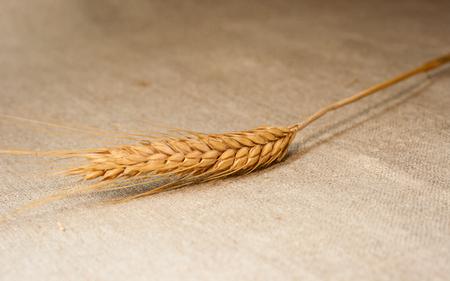 sackcloth: spica wheat on sackcloth