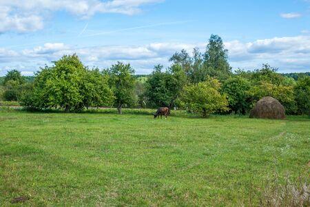 hayrick: summer landscape with cow