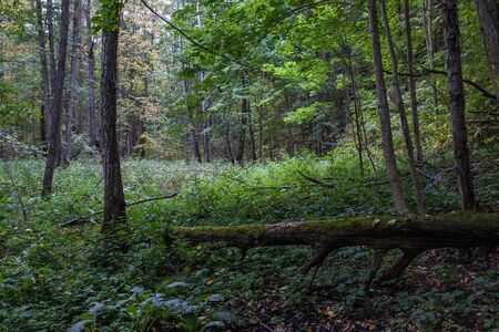 herbage: fallen tree in the forest