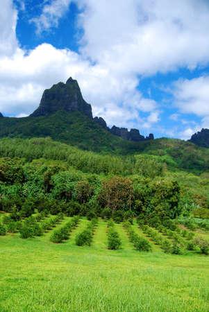 Luna de miel, vista de las montañas en Moorea Vacaciones en la Polinesia Francesa Foto de archivo - 14555572