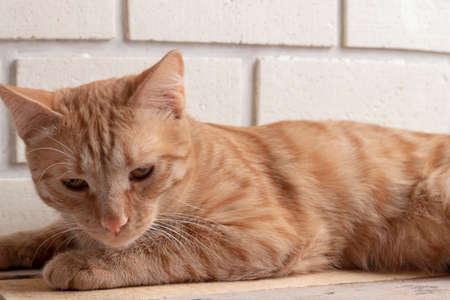 ginger kitten lying on wooden table. Horizontal