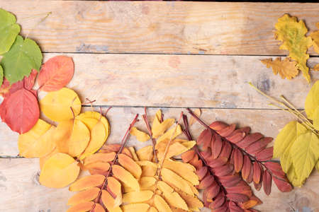 Autumn Leaves over wooden background.Top view