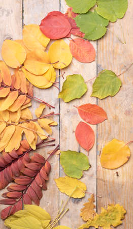 Autumn color Leaves over wooden background.Top view Stock fotó