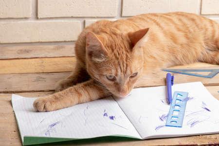 Cat lying on wooden table near school books