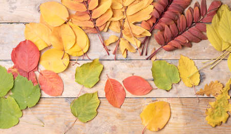 Autumn design background, colorful leaves. Top view and place for text Reklamní fotografie
