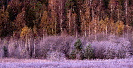 Landscape. Forest and meadow covered with hoarfrost. frosty Stock Photo
