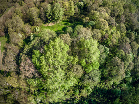 predominantly: Predominantly deciduous forest from a birds eye view. Trees with young foliage. Spring. Clear day. Yaroslavl region. Russia