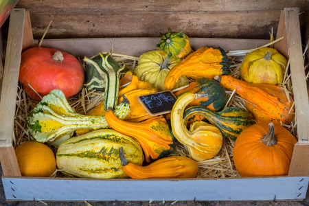 Harvest of decorative pumpkins in a wooden box. For sale.
