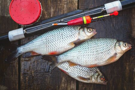 rutilus: Catch from fresh river fish, a can of bait and a float rod. On a wooden background
