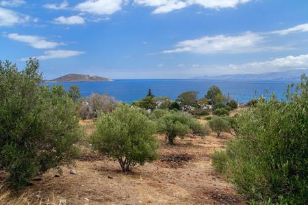 Olijfbomen aan de kust van de Golf van Mirabello. Kreta. Griekenland.