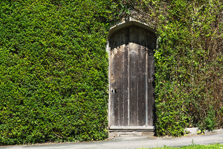 The old door in the wall. The wall was overgrown with a curly plant Stock Photo