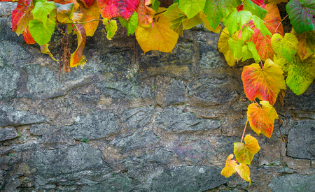 Background with bright autumn leaves and a stone wall