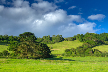 Green picturesque hill with trees. Good sunny weather. Branscombe. Devon. UK