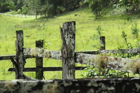 fencepost: Mossy Fences in Old Stock Yard