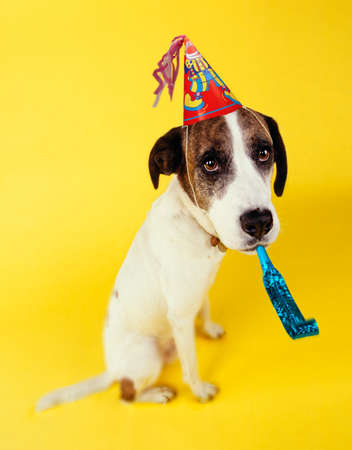 SAD LOOKING DOG WITH PARTY HAT AND SQUEAKER Imagens