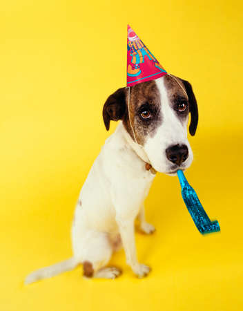 Dog With party hat and Squeaker.