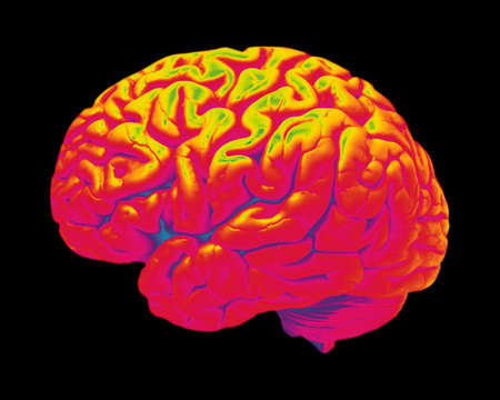 False colour image of human brain isolated on black background