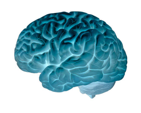 Human brain isolated on white background 写真素材