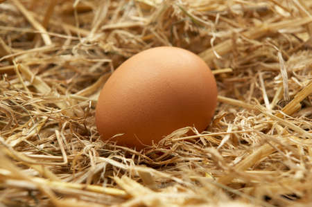 Single brown egg in nest of straw in close up
