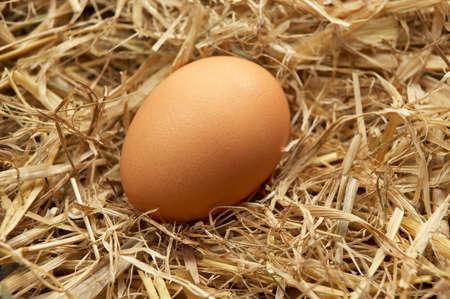 Single brown egg in nest of straw Фото со стока