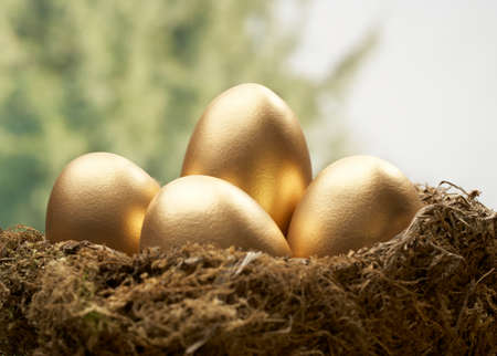 Four golden eggs in bird nest with trees in background Фото со стока