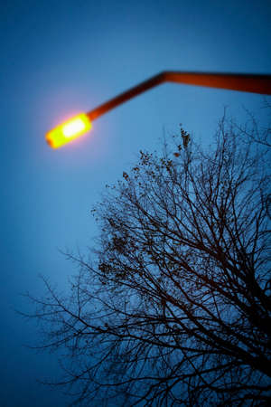 LAMP POST AND TREE AGAINST NIGHT SKY Stock fotó