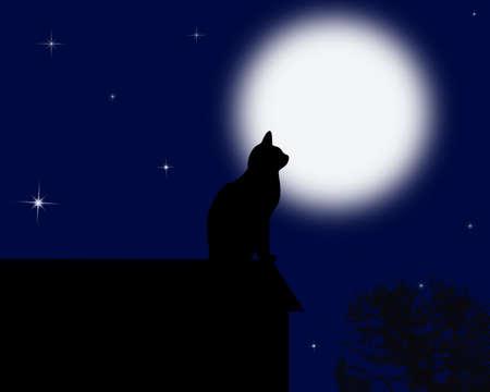 Moon cat photo