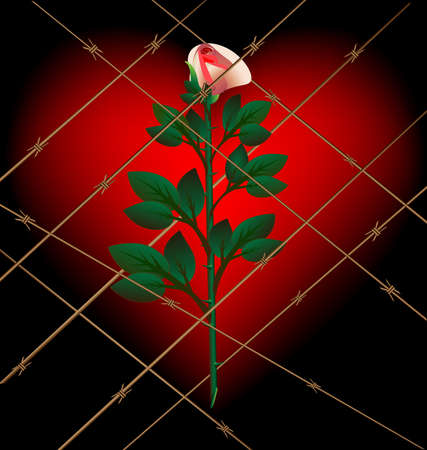 assignation: on a dark background with a large crimson heart behind barbed wire Lonely Rose Illustration