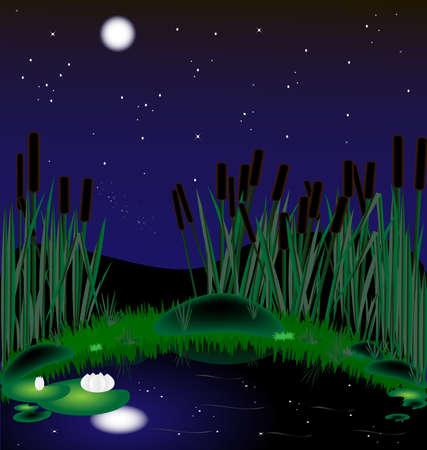 rietkraag: Moonlit nacht, een meer met riet en waterlelies