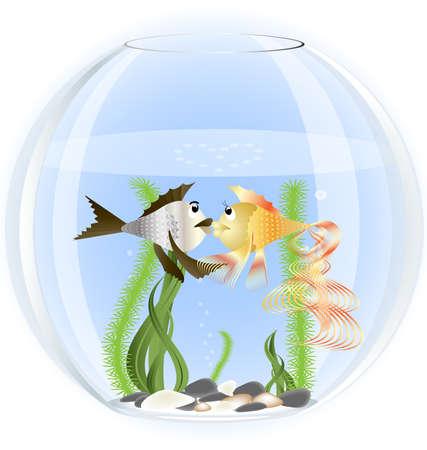 stone bowl: in a glass aquarium two fish in love