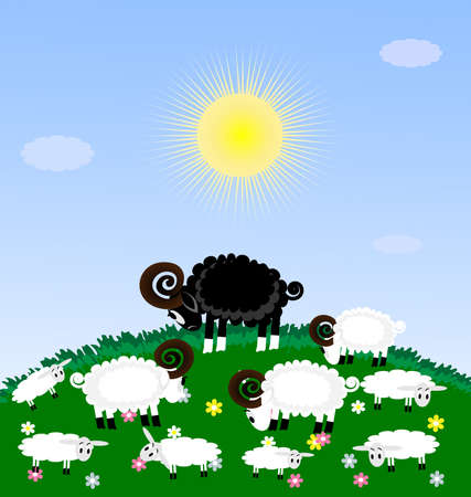 a green grazing white sheep and lambs, among them the sad one black sheep Vector