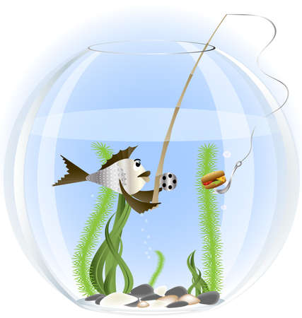 from an aquarium fish tossed fishing rod baited hamburger
