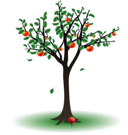 albero di mele: su uno sfondo bianco � l'albero di mele