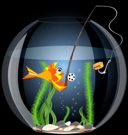 in a large aquarium a golden fish eating hamburger