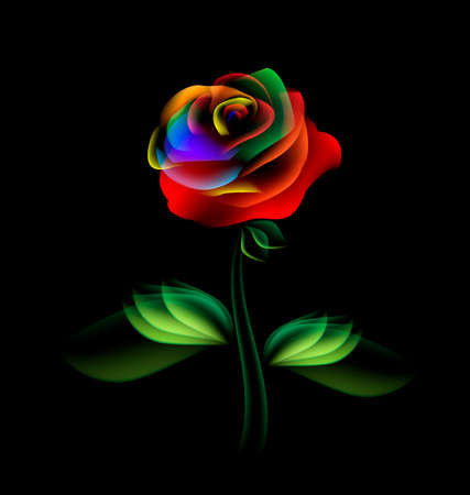 rose: black background and multi-colored fantasy translucent flower