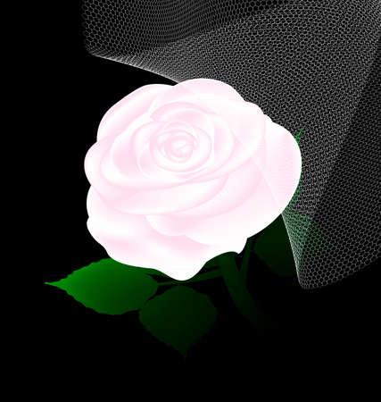 Abstracte witte roos en sluier