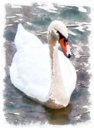 swiming: illustration white swam
