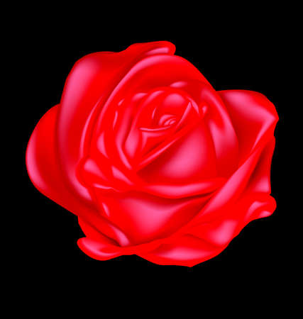 abstract scarlet rose Stock Photo