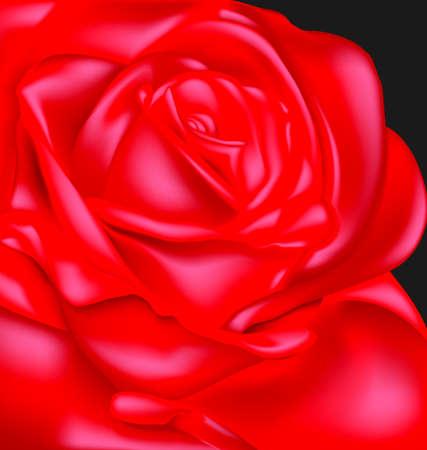 Dark and scarlet rose Illustration
