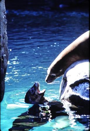tacoma: Seals conversing