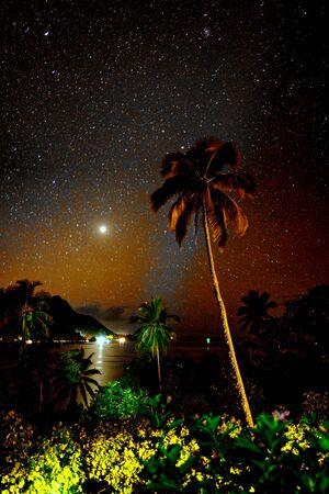 snorkle: Starlit Palm tree Stock Photo