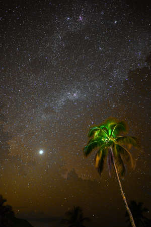 moonlit: Moonlit Palm,Tahiti