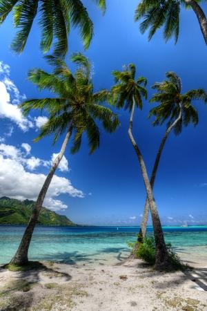 moorea: Crossed Palms, Moorea