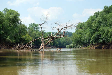 Dangerous river snag