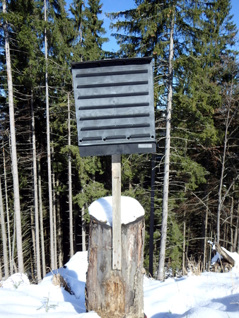 traps: Black pheromone traps insects in the spruce forest