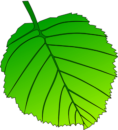 eps picture: leaf alder, vector, isolated alder leaf,