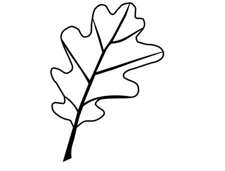 roble, Quercus petraea, vector, aislado hoja de roble,