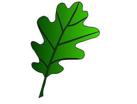 quercus: oak, Quercus petraea, vector, isolated oak leaf,