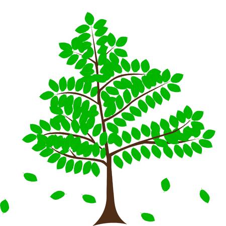 beech: deciduous tree, beech,vector,